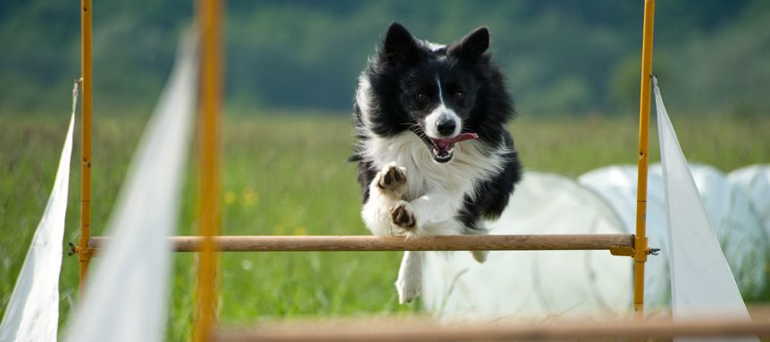 Warm up for dog agility