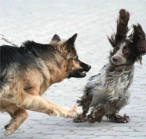 One dog is lunging at another who is shocked