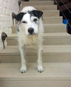 Dennis Case Study - dog joint pain